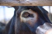 Head of a donkey closeup — Stock Photo