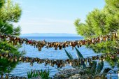 Padlocks of love Makarska — Stockfoto