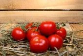 Red tomatoes in straw — Stockfoto
