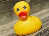 Small yellow plastic duck — Stock Photo