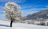 Mountain landscape in winter with snow — Stockfoto