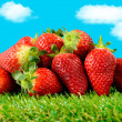 Several strawberries on green grass — Stock Photo #69342559