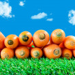 Several carrots on green grass — Stock Photo #69343097