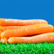 Several carrots on green grass — Stock Photo #69463479