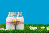 Three small bottles of milk in a meadow — ストック写真