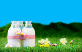 Three small bottles of milk in a meadow — Stock Photo