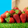 Several strawberries on green grass  — Stock Photo #70022389
