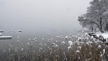 Lake in winter — Stock Video