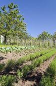 Growing bio vegetables in the northern Bulgaria in the summer — Stock fotografie