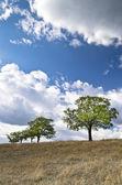 Dramatische blauer Himmel, Wiese und einem Baum nahe dem Dorf Katselovo — Stockfoto