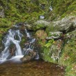 Small waterfall in mossy woodland. — Stock Photo #77665196