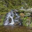 Small waterfall in mossy woodland. — Stock Photo #77665212