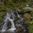Small waterfall in mossy woodland. — Stock Photo #77665242