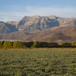 Autumn morning frosted field with poplars and mountains — Stock Photo #55706985