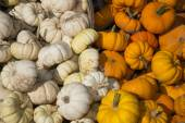 Fall harverst of white and orange specialty pumpkins — Stock Photo