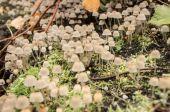 Small mushrooms — Foto de Stock