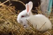 Rabbit on Dry Grass — Stock Photo