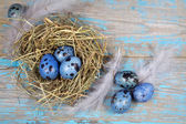 Easter decorations. Eggs in nests on wooden background — Stok fotoğraf