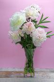 Flores de peônia em fundo roxo — Fotografia Stock