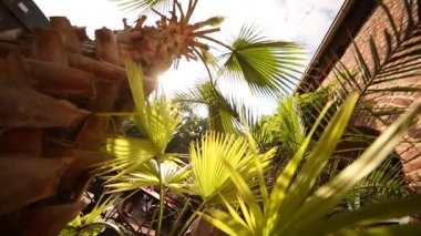 Light of the sun through the tropical palm leaves — Stock Video