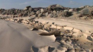 The Nazca Desert in Peru — Stock Video