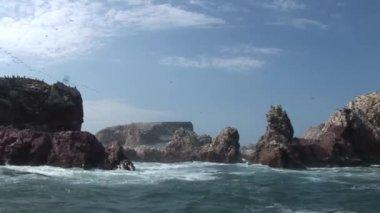 Ballestas Islands near Peru — Stock Video