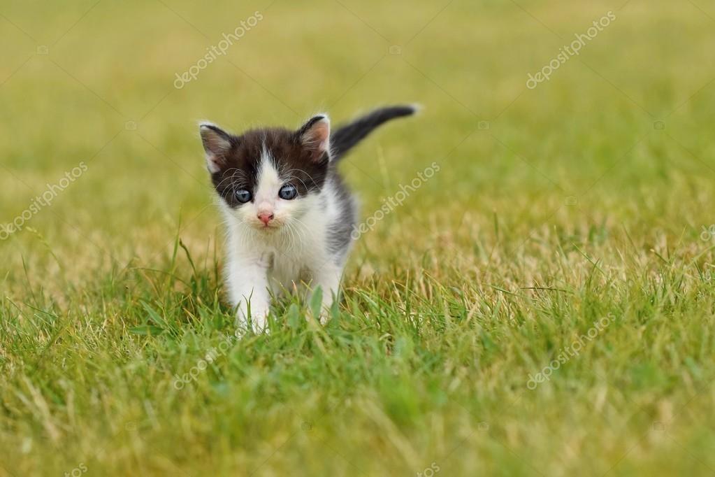 Male cat uti blockage