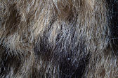 Photo of the fake fur — Stockfoto