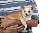 Photo of the small dog sitting on mans hands — Stockfoto