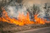 Bushfire burning at Kruger Park in South Africa - Disaster in bush forest with fire spreading in dry woods — 图库照片