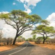 African landscape with empty road and trees in Zimbabwe - On the way to Kazungula and the border with Botswana along Zambezi Drive - Concept of adventure in the nature in Africa territory — Foto de Stock   #58100853