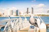 Seagull at San Diego waterfront with skyline view - Skyscrapers from Coronado Island in California - United States — Stock Photo