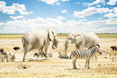 Group of wild mixed animals relaxing on a water pool spot at Etosha Park - World famous natural wonder in the north territory of Namibia - African safari game drives and free wildlife outdoors — Zdjęcie stockowe