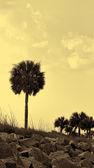 Golden Palm Tree Silhouette Landscape Background — Stock Photo