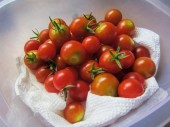 Bowl of Bright Red Cherry Tomatoes — Stock Photo