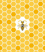 Sweet geometric pattern with honeycomb and bee — Vettoriale Stock