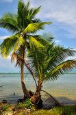 Coconut on sea beach — Zdjęcie stockowe