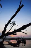 Silhuetter av kokosnöt träd på stranden och solnedgången — Stockfoto