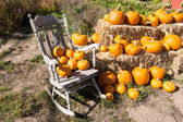 Pumpkin Patch and rocking chair — Stock Photo