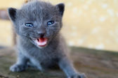 Adorable Pussycat with Gray Hair — Stock Photo