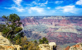 Dramatic view of the Grand Canyon South Rim — Stok fotoğraf