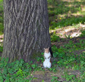 Gray squirrel in the undergrowth — Stock Photo