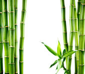 Branches of bamboo board — Stock Photo