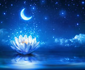 Waterlily and moon in starry night - magic background — Foto Stock