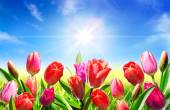 Blooming in springtime — Stock Photo