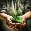 Farmer hands holding a green young plant - new life concept — Stock Photo #75157191