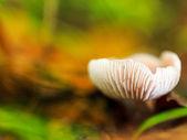 Mushroom Kingdom — Stock Photo