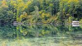 Alpsee near Hohenschwangau — Stock Photo