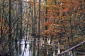 Enchanted Autumn Forrest — Stock Photo