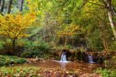 Idyllic Autumn Forrest — Stock Photo